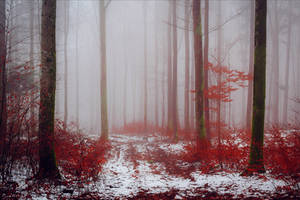 Bloodred Forest XII by Aenea-Jones
