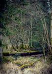 Cursed Woods II