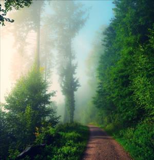 Foggy Morning XX v2.0