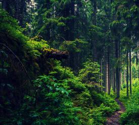 Forbidden Woods v2.0 by Aenea-Jones