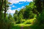 Country Trail V