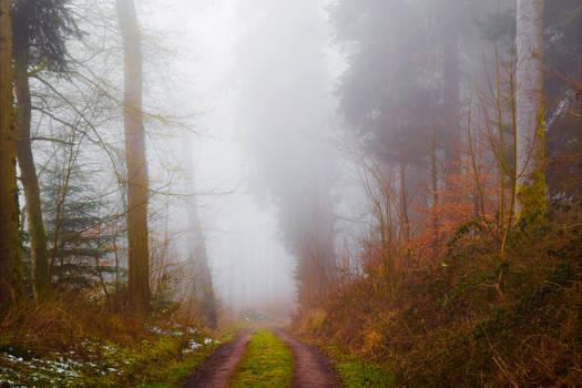 Lost in the Woods V v2.0