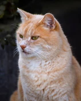 Ginger III