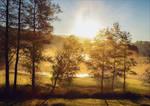 Golden Morning IV