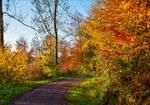 Autumn remembrance XIV