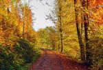 Autumn remembrance XVI
