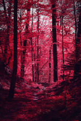 Bloodred Forest XVI by Coccineus