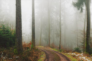 The Old Path XI by Coccineus