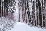 Winter has come VI