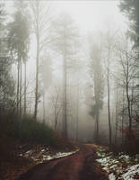 The Old Path XII by Coccineus