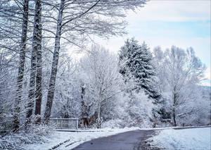 Still Winter by Aenea-Jones