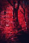 Bloodred Forest XV v2.0 by Aenea-Jones