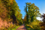 Autumn remembrance XVIII