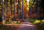 Autumn Colors VIII