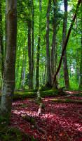 Deep in the Woods XI by Aenea-Jones