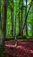 Deep in the Woods XI by Coccineus