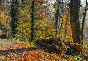 Autumn remembrance XIX by Aenea-Jones