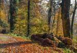 Autumn remembrance XIX