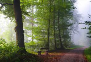 Foggy Morning XXVII by Aenea-Jones
