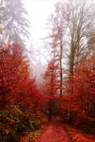 Bloodred Forest XIX by Aenea-Jones