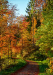 Autumn remembrance XXII