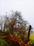 Last Breath of Autumn XVI