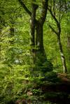 The World is Green XXVI