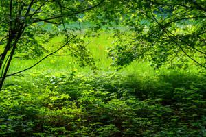 The World is Green XXVII by Aenea-Jones
