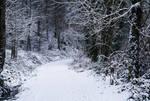 Eternal Winter X