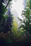 Foggy Morning XXVIII v3.0
