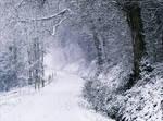 Snowland X v4.0