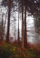 Hazy Forest by Aenea-Jones