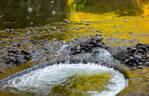 Golden Water IV