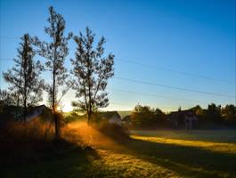 Golden Morning VI