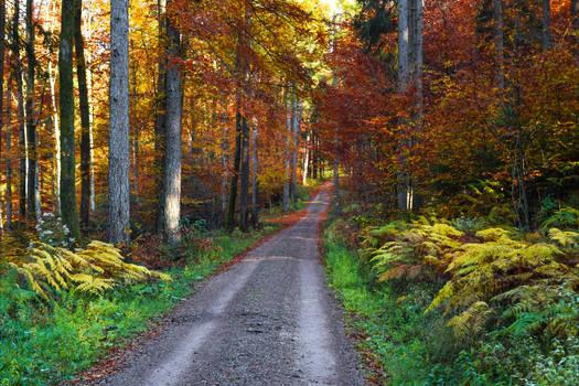 Autumn Colors IX