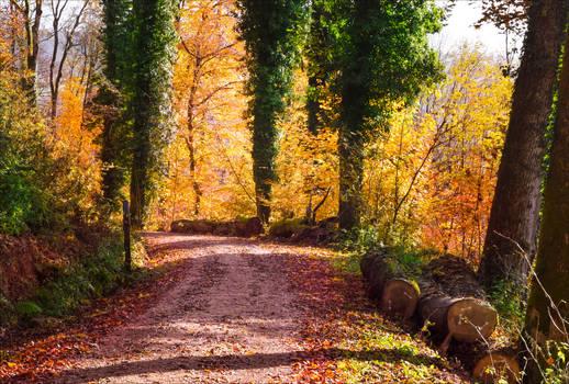 Autumn remembrance XXV