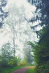 Foggy Morning XXX by Coccineus