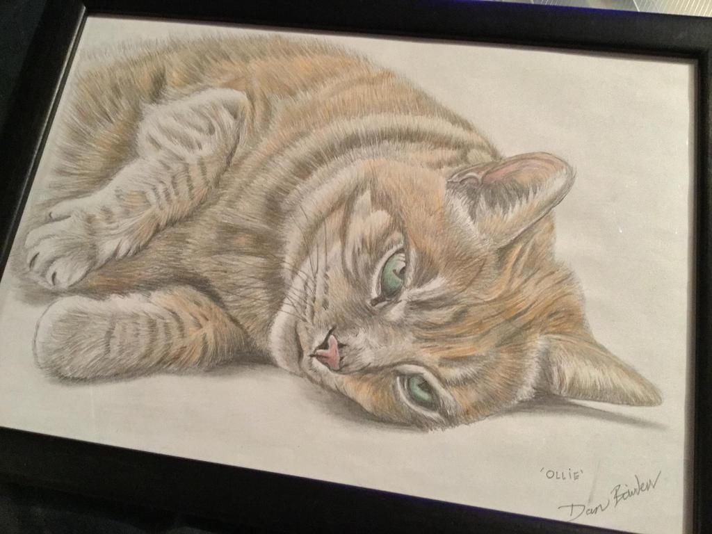 Ollie the cat