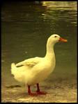 :Ducks pt. I: - Pride