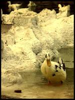 :Ducks pt. II: - Doubt by demisone