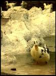 :Ducks pt. II: - Doubt