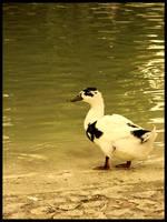 :Ducks pt. IV: - Suspicious by demisone