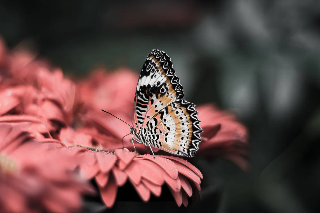 Schmetterling Orange by dona-harry