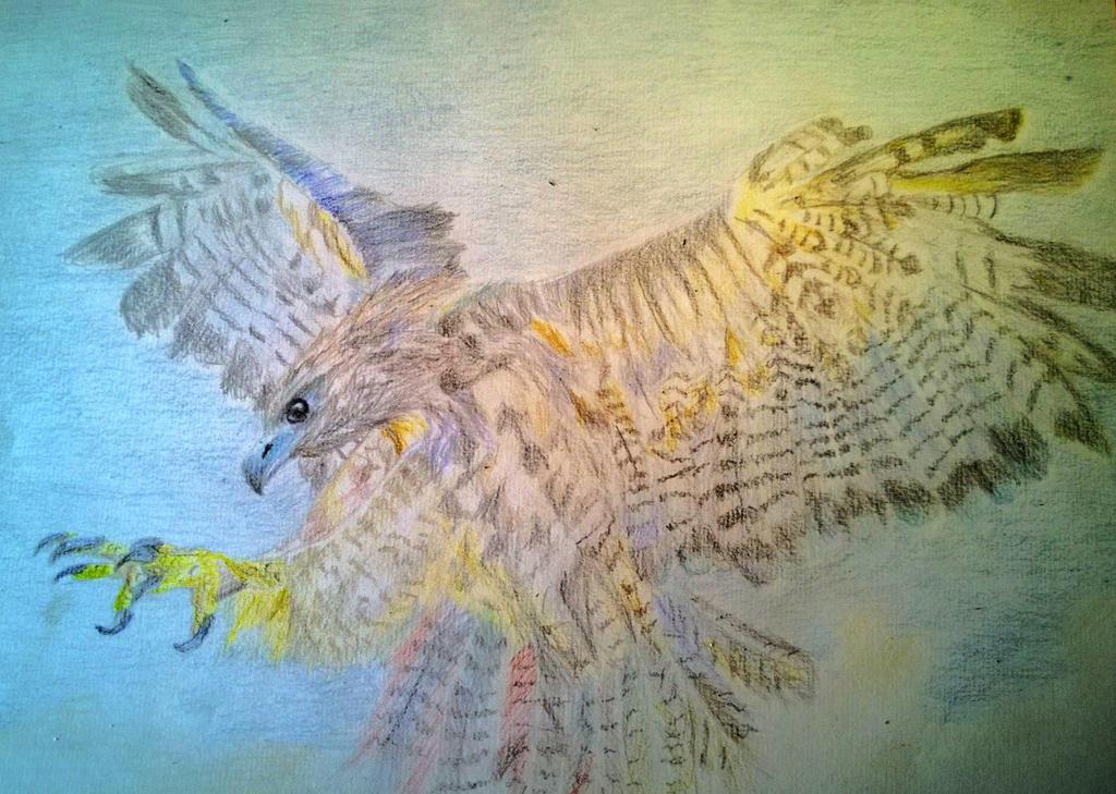 Hawk by mylifeits