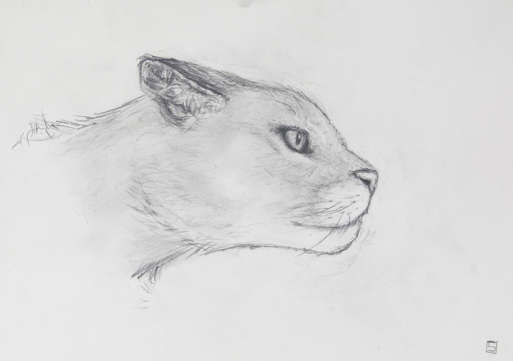 Puma by Sascha-Snowstorm