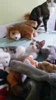 My littel cat Cowabunga