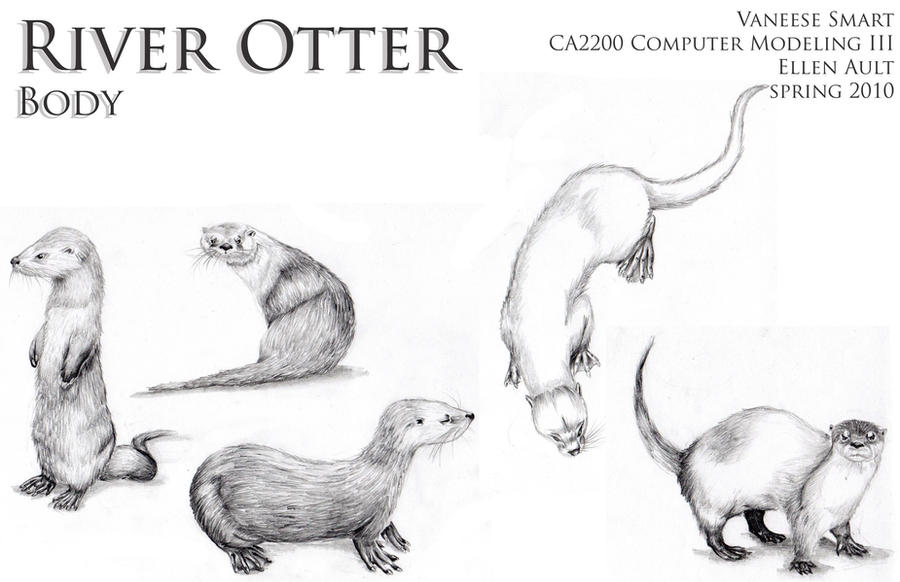 River Otter Body Drawi...