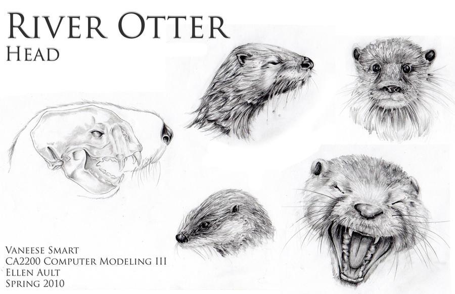 River Otter Head Drawings Ref by Vinnie14 on DeviantArt