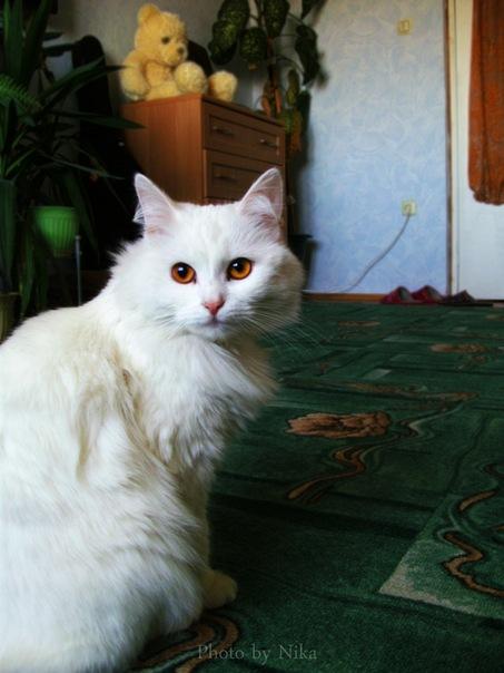 http://fc06.deviantart.net/fs70/f/2011/311/e/4/cat_by_nika_volf-d4feczk.jpg