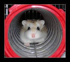 My little hamster by saddiamonds